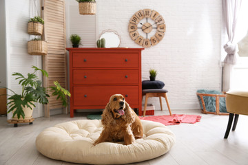 Adorable dog on pet bed in stylish room interior