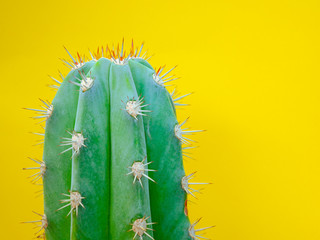 Green cactus on yellow background, Minimal creative design, Creative unusual  color