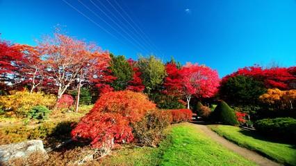 晩秋の平岡樹芸センター