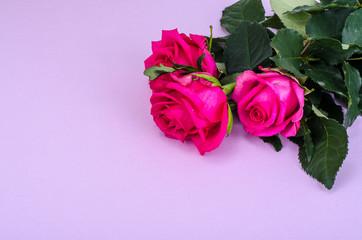 Beautiful fresh garden roses