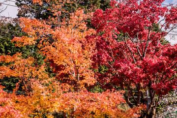 Beautiful autumn scene at Toyko, Japan