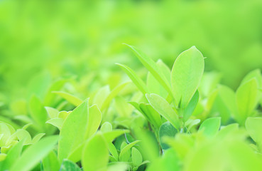 Green tree leaf on blurred background in the park with clean pattern. Close-up nature leaves in field for use in web design or wallpaper.
