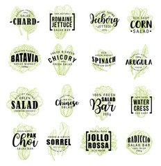Salads vegetable icons, vector lettering