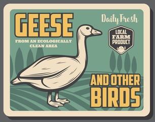 goose birds from farm, retro vector poster