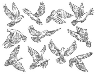 Pigeon flying with olive branch, vector sketch