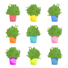 Set of three inhouse plants in different coloured pots. Urban kitchen windowsill garden illustration. Lush green culinary herbs collection in cartoon style. Vector isolated on white