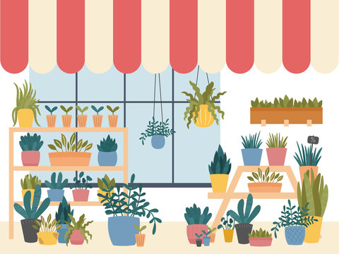 Flower shop interior with various indoor plants in pots, planters and boxes,standing on shelves and stands, with window striped shed.Cute Scandinavian Hygge style.Vector illustration, dark background