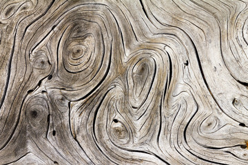 Natural tree wood background swirl pattern texture