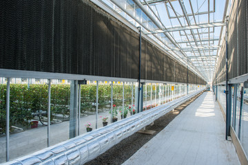 glass roof interior with pipes and walls in modern greenhouse, photo in length