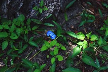 blue flower in garden