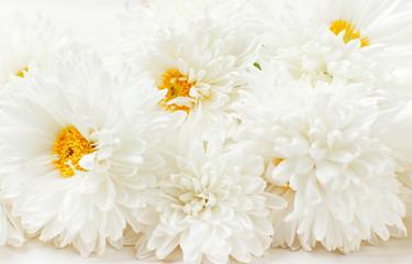 White autumn chrysanthemum flowers on white wooden background Copy Space. Chrysanthemum wallpaper. Floral background. Autumn bouquet lifestyle
