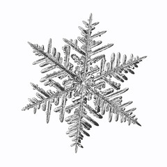 Snowflake isolated on white background. Vector illustration based on macro photo of real snow crystal: complex stellar dendrite with fine hexagonal symmetry, relief surface and six thin, elegant arms.