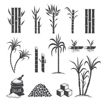 Sugarcane farm symbols. Sweets field plant harvest milling vector colored illustrations isolated on white background. Sugarcane sweet, sugar cane harvest