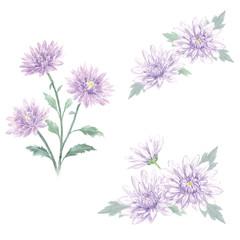 菊の花 セット