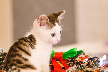 the kitten is sitting. christmas theme holidays christmas.