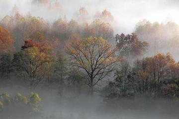 Jesień wschód słońca na forsta z mgłą, Włochy - 234241721