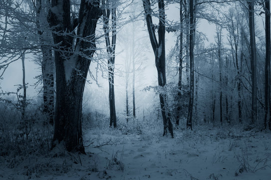 winter evening in snowy woods