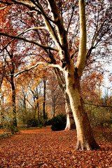 Sentiero nel parco a Berlino