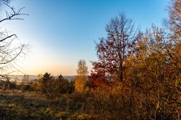 Bosquet d'arbres avec leurs couleurs d'automne