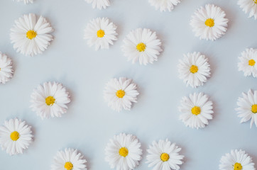 A lot of daisies on a gray background.