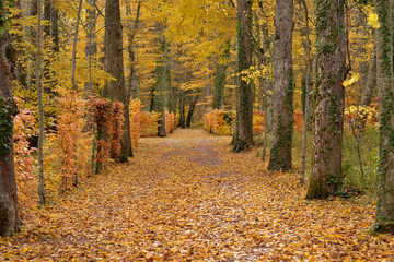 Path in the forest in autumn