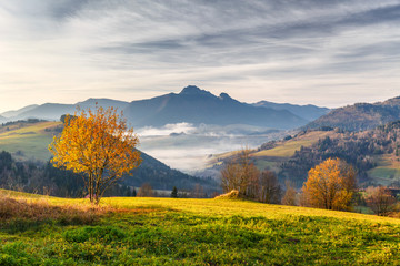 Tree in a foreground of autumn landscape with mountains at sunrise. Mala Fatra National Park, not far from the village of Terchova in Slovakia, Europe.
