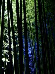 竹林の小径ライトアップ[4]
