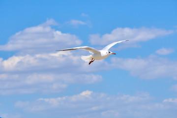 Sea gulls flying over a beach in a clear blue sky