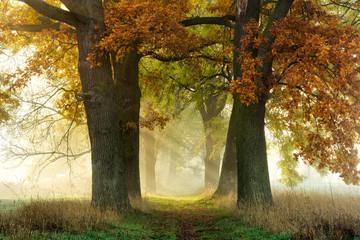 Footpath through Avenue of Oak and Ash in Autumn, Sunbeams through Morning Fog