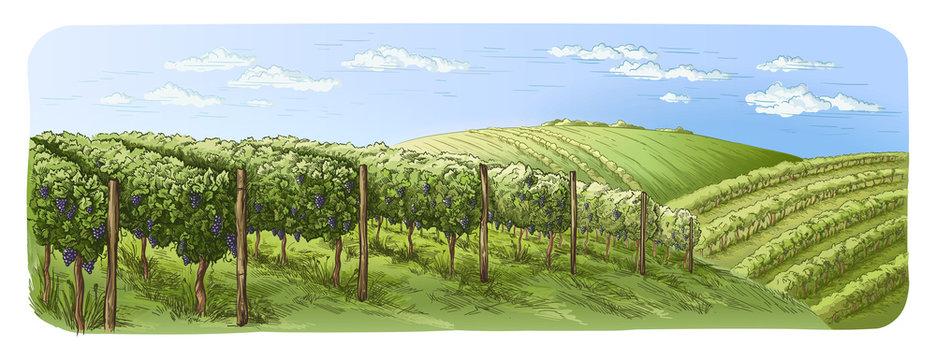 colorfull vine plantation hills, trees, clouds on the horizon vector illustration