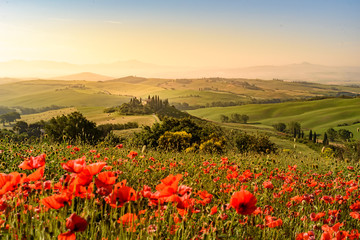 Foto auf Gartenposter Beige Poppy flower field in beautiful landscape scenery of Tuscany in Italy, Podere Belvedere in Val d Orcia Region - travel destination in Europe