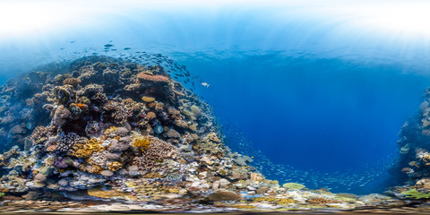 360 of Great Barrier Reef, healthy
