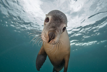 Portrait of seal
