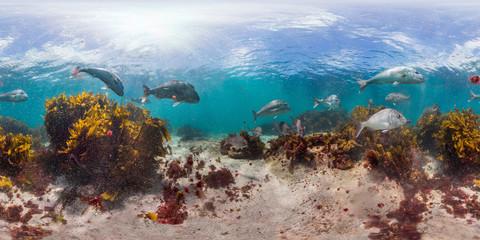 360 of reef in New Zealand