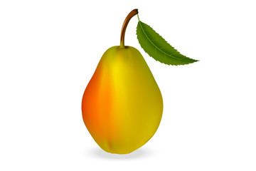 Realistic 3d pear with leaf, latin name  Pýrus, varieties of Early on a white background with realistic shadows. Vector illustration.