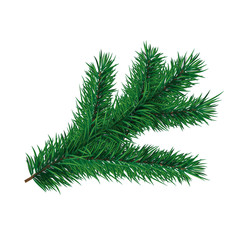 Fir-tree branch.