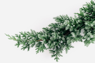Coniferous spruce branch on a white background. Christmas, New Year, winter concept. Flat lay, top view, copy space