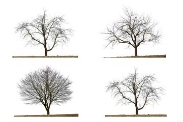 Vier kahle Bäume im Winter, isoliert auf weißem Hintergrund