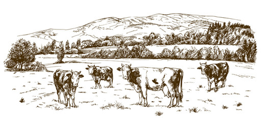 Cows grazing on meadow.