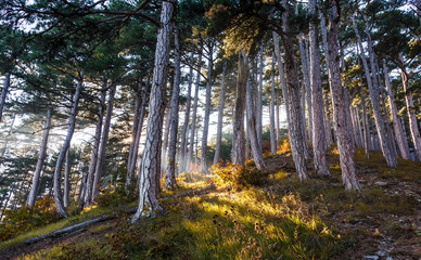 Sun rays through the trees, autumn forest in Crimean mountains