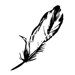 one feather bird vector. black silhouette. Feather vector illustration one color.