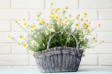 Bouquet of chamomile flowers in basket on brick wall background