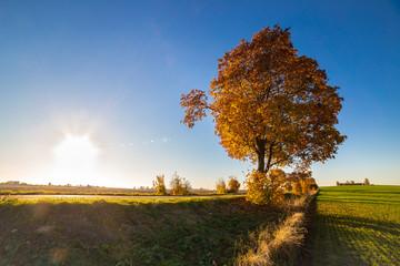 Autumn tree and blue sky