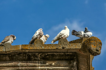 Group of wild pigeons get warm in the autumn sunny day on a stone ledge of the roof of a medieval building