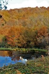 Tuinposter Zwaan Paysage d'automne.