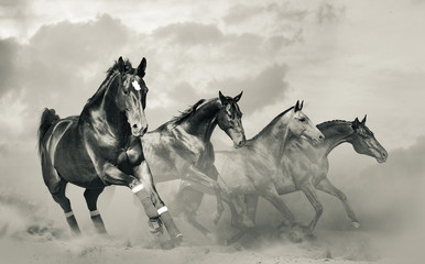 Beautiful horses herd