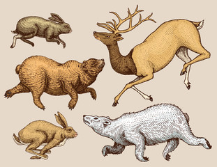 Soaring Hare Rabbit northern brown Bear Deer. Set of Wild forest animal jumping up. Engraved hand drawn sketch. Vintage style.