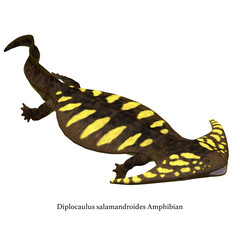 Diplocaulus Amphibian Side Profile with Font - Diplocaulus was an amphibian tetrapod that lived in the Permian and Carboniferous Periods of North America and Africa.