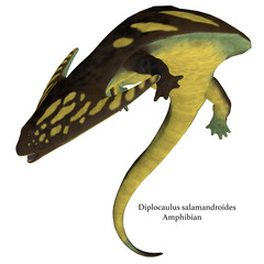 Diplocaulus Amphibian on White with Font - Diplocaulus was an amphibian tetrapod that lived in the Permian and Carboniferous Periods of North America and Africa.