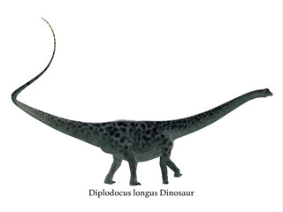 Diplodocus Dinosaur Side Profile with Font - Diplodocus was a sauropod herbivorous dinosaur that lived in North America during the Jurassic Period.